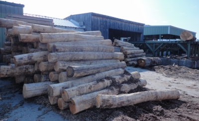 Logs waiting to be milled in CT