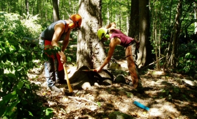 Gibson Hill Forest Products LLC felling a tree on CFPA's Whitney Forest.