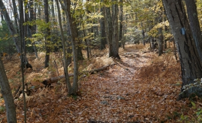 Tunxis Trail in Southington