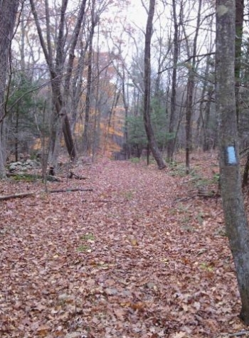 Blue-Blazed Natchaug Trail on Clemence Forest in Eastford