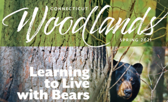 Connecticut Woodlands, Spring 2021