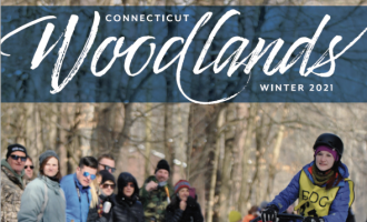Connecticut Woodlands, Winter 2021